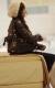 vanessa-hudgens-bed-12158-6.jpg